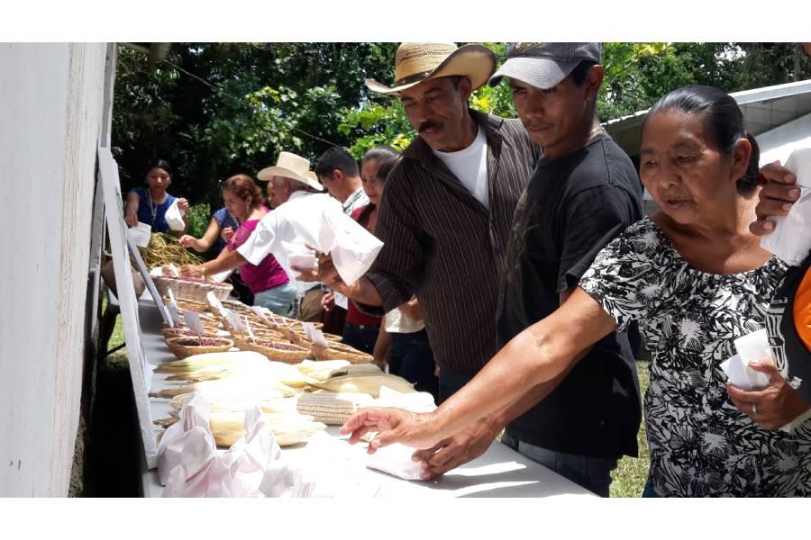 Uso sostenible de la agro-biodiversidad de maíz, frijol y especies sub-utilizadas en comunidades indígenas de Centroamérica: Una estrategia para la seguridad alimentaria y adaptación climática; Financiado por el Fondo de Distribución del TIRFAA/FAO
