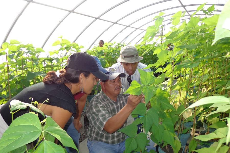 Programa colaborativo de Fitomejoramiento Participativo en Mesoamérica (FPMA), financiado por el Fondo de Desarrollo Noruego.