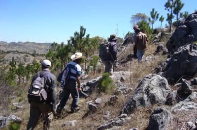 Protección de Ecosistemas únicos y especies endémicas amenazadas en 7 unidades de Conservación, Nacionales, Municipales y Comunitarias del departamento de Huehuetenango, financiado por el Fondo a la Conservación de Bosques Tropicales en Guatemala (FCA).