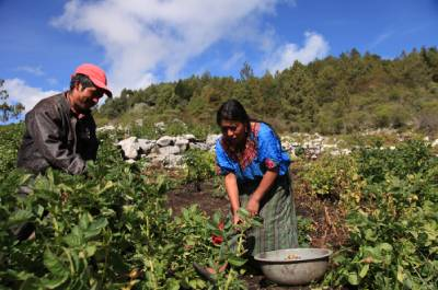 Mujeres Rurales y Cambio Climático –MRCC- y Red de Incidencia, financiado por el Fondo de Desarrollo Noruego.