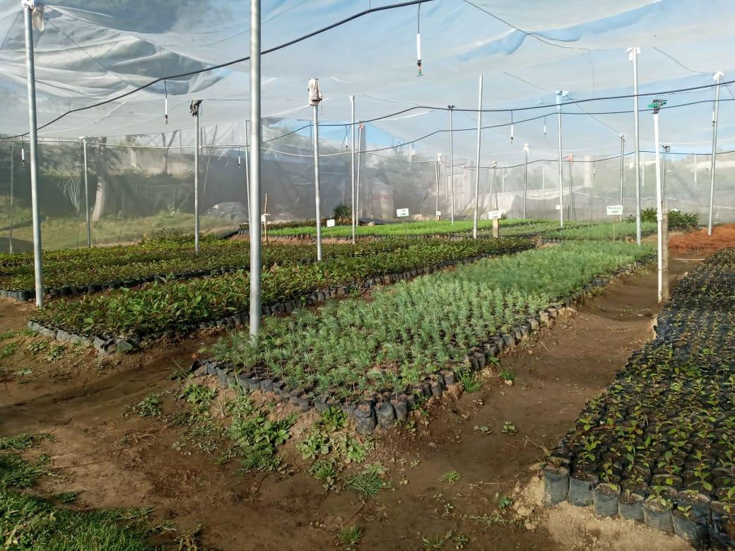 Tecnificación de Vivero para Producción de planta forestal