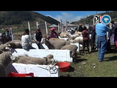 Ferias del Cordero y Agrobidiversidad