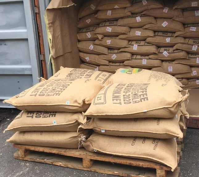 Café de Huehuetenango es exportado a Noruega y Alemania